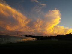[写真]ハウス上空に、大きな夕焼雲が輝いている様子