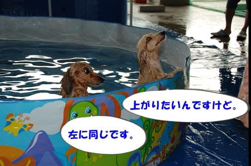 DSC_0154-1.jpg