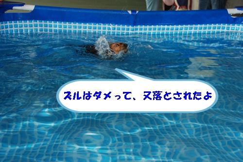 DSC_0179-1.jpg