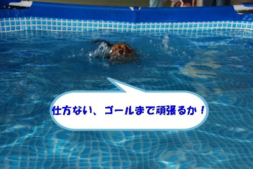 DSC_0180-1.jpg