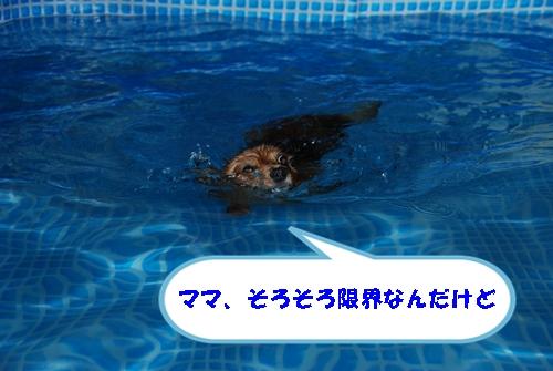 DSC_0184-1.jpg