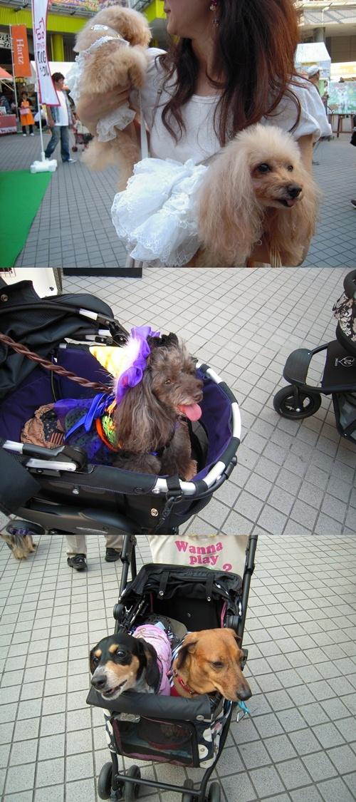 otomodachi_20121003212621.jpg