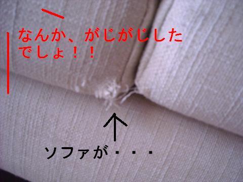 DSCN1116_convert_201101042254.jpg