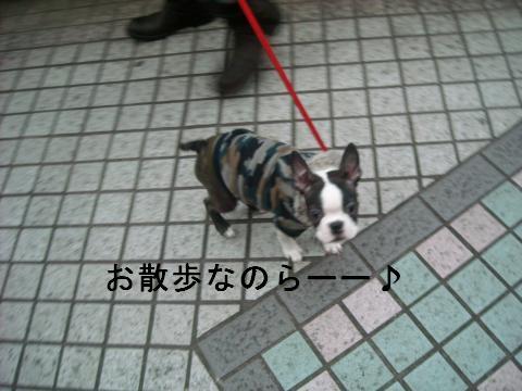 DSCN1383_convert_201101152212.jpg