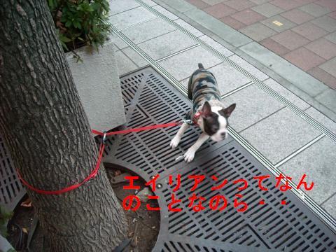 DSCN1524_convert_201101231805.jpg