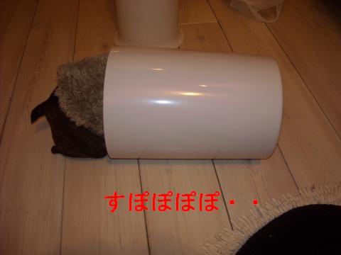DSCN1694_convert_201102111119.jpg
