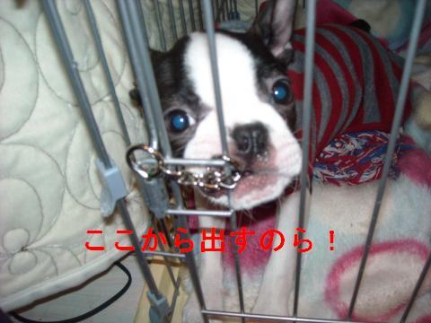 DSCN1723_convert_201102222139.jpg
