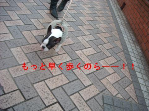 DSCN1802_convert_201102131720.jpg