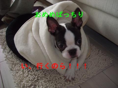 DSCN1843_convert_201102252203.jpg