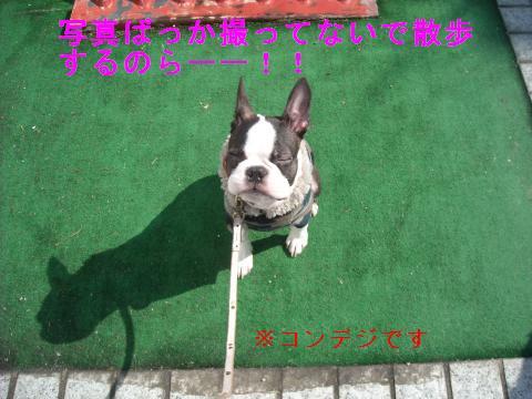DSCN1935_convert_201103042039.jpg