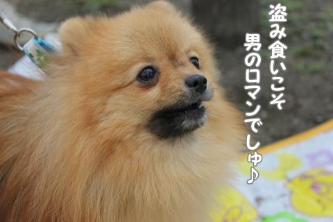 120308oosakaume10.jpg