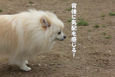 120311kanjirukehai.jpg