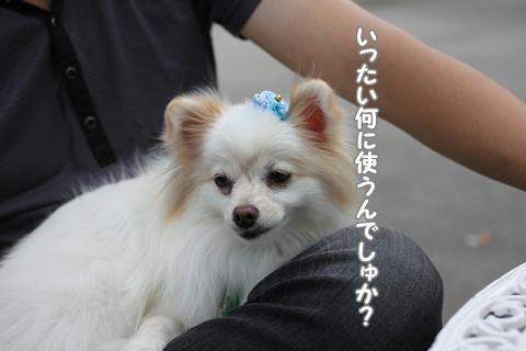 20120926-IMG_0594.jpg