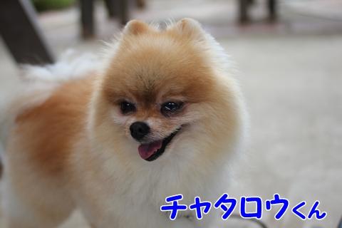 20121018-IMG_1620.jpg