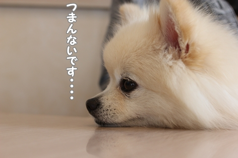 20121024-IMG_2417.jpg