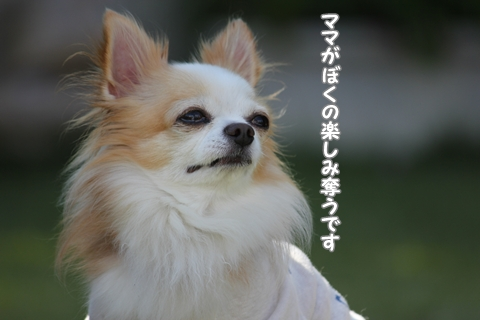20121029-IMG_2888.jpg