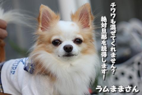 20121031-IMG_2901.jpg