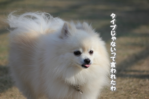 20121210-IMG_5084.jpg
