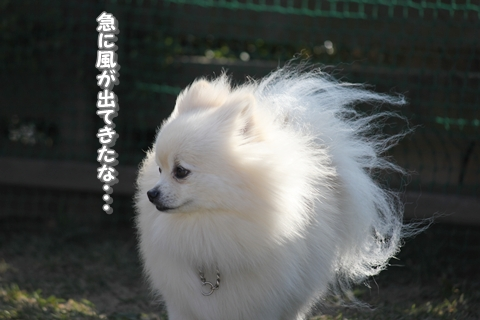20121211-IMG_5150.jpg