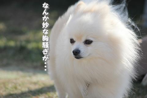 20121211-IMG_5151.jpg