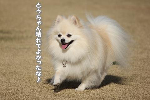 20121212-IMG_5215.jpg