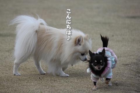 20121213-IMG_5405.jpg