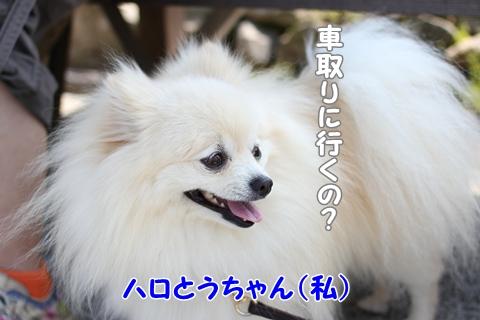 IMG_4258-20120508.jpg