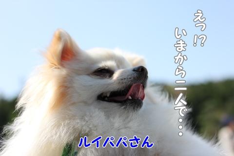 IMG_4262-20120508.jpg
