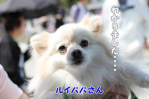 IMG_4263-20120508.jpg