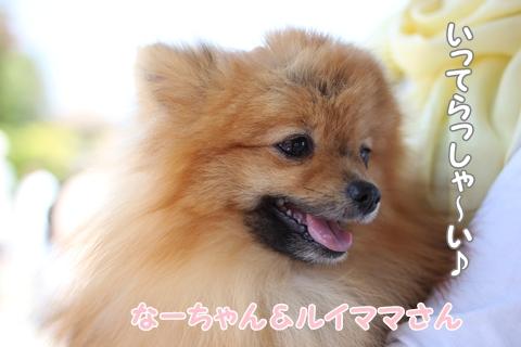 IMG_4265-20120508.jpg