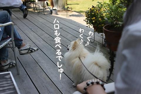 IMG_4293-20120510.jpg