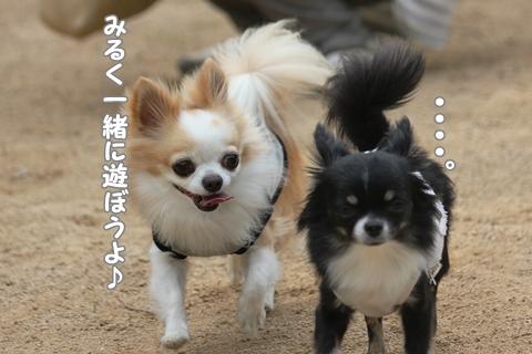 IMG_4467-20120514.jpg