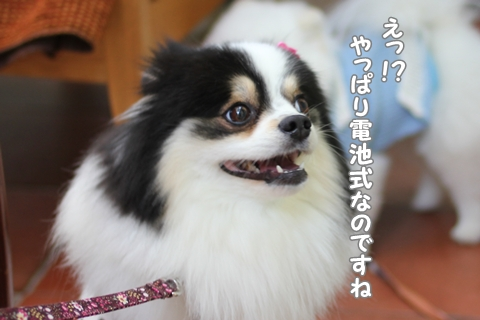 IMG_4844-20120516.jpg