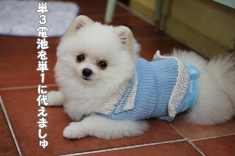 IMG_4871-20120516.jpg