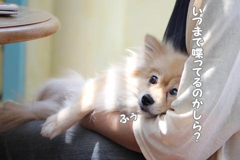 IMG_4901-20120517.jpg