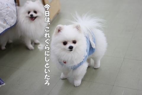 IMG_4978-20120518.jpg