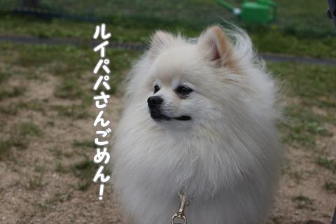 IMG_5266-20120524.jpg