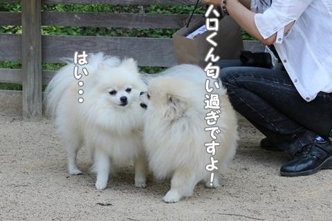 IMG_5579-20120528.jpg