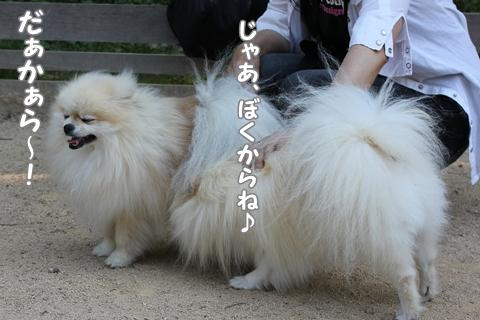 IMG_5583-20120528.jpg