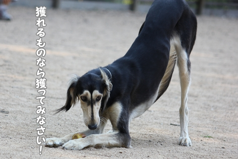 IMG_5603-20120529.jpg