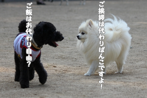 IMG_5649-20120529.jpg