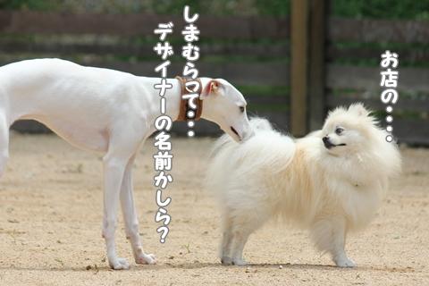 IMG_6030-20120604.jpg