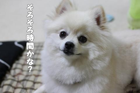 IMG_6116-20120609.jpg