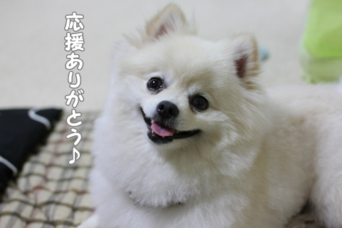 IMG_6120-20120620.jpg