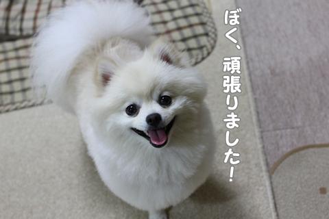 IMG_6121-20120620.jpg