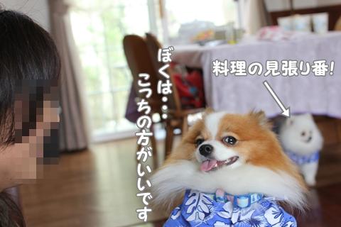 IMG_6132-20120614.jpg