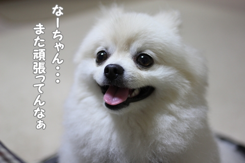 IMG_6416-20120620.jpg