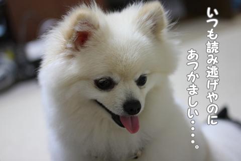 IMG_6420-20120620.jpg
