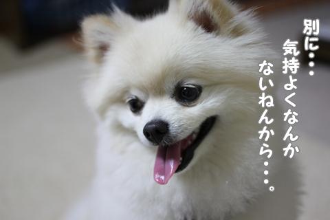 IMG_6432-20120616.jpg