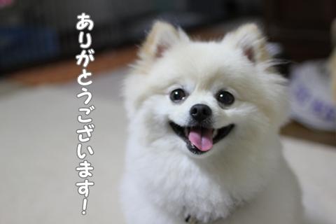 IMG_6436-20120620.jpg